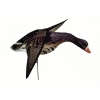 Чучело белолобого гуся со складными крыльями